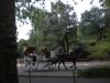 centralparkhorse