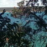 near Cronulla