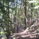 Pfeiffer Big Sur Pine Ridge Walk