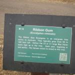 Info  on Australian Tree on the Bob Jones Trail
